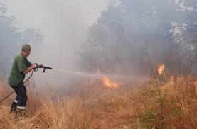 Видински огнеборци гасиха пожар в близост до Новоселци
