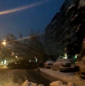 Във Видин:Внимание шофьори паднало дърво затруднява движението (Снимки)