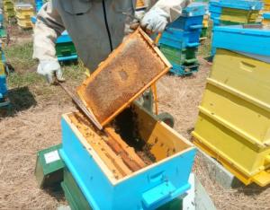 """Комплекс от мерки в сектор """"Пчеларство"""" са заложени в Стратегическия план за новата ОСП"""