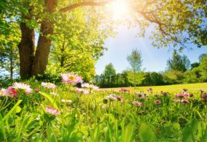 Новата седмица започва със слънце