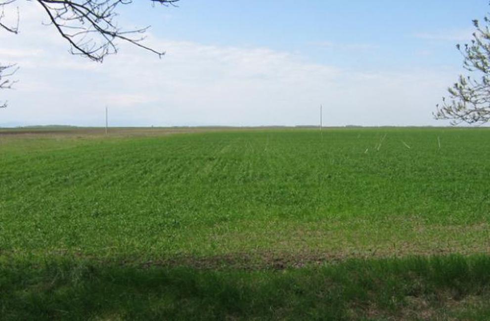 Предупреждават за пръскане на посевите в Община Видин