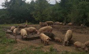 БАБХ и МВР разкриха нелегален обект за производство и търговия с храни в софийска област (Снимки)