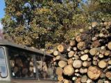Иззеха незаконни дърва от две видински села